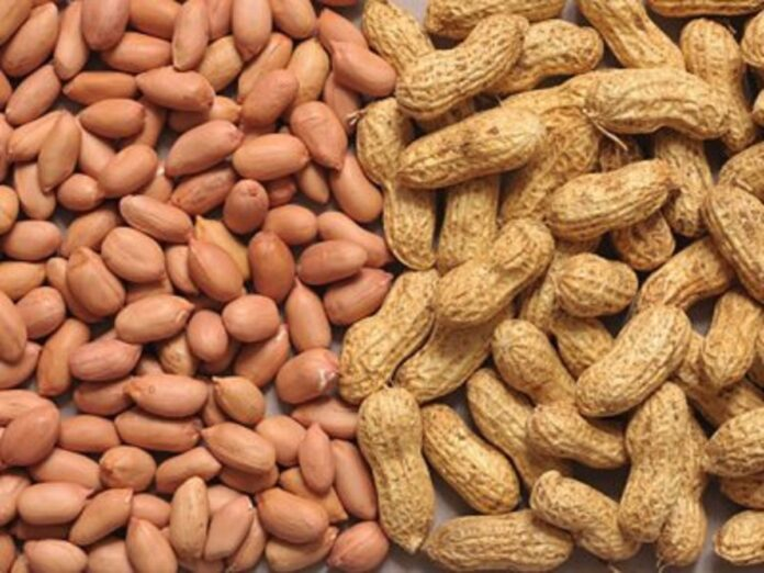 India exports 24 metric ton of groundnuts to Nepal